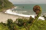 bild Farn Neuseeland Bildagentur Reisefotografie