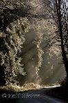 bild Sonnenstrahlen Strasse Alte Bäume Regenwald