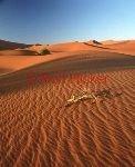 bild Sandduenen Namibia