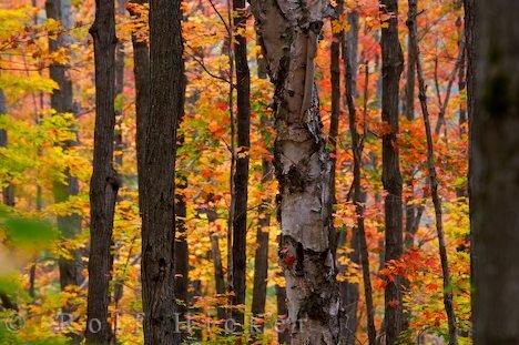 Bild Herbstreise Ontario Algonquin Provincial Park