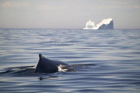 Bild Im Reich Der Wale Eisberg