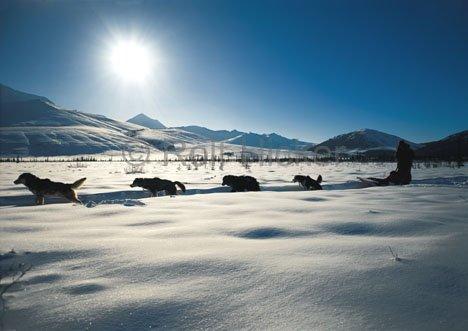 Bild Wintersport Natur Alaska